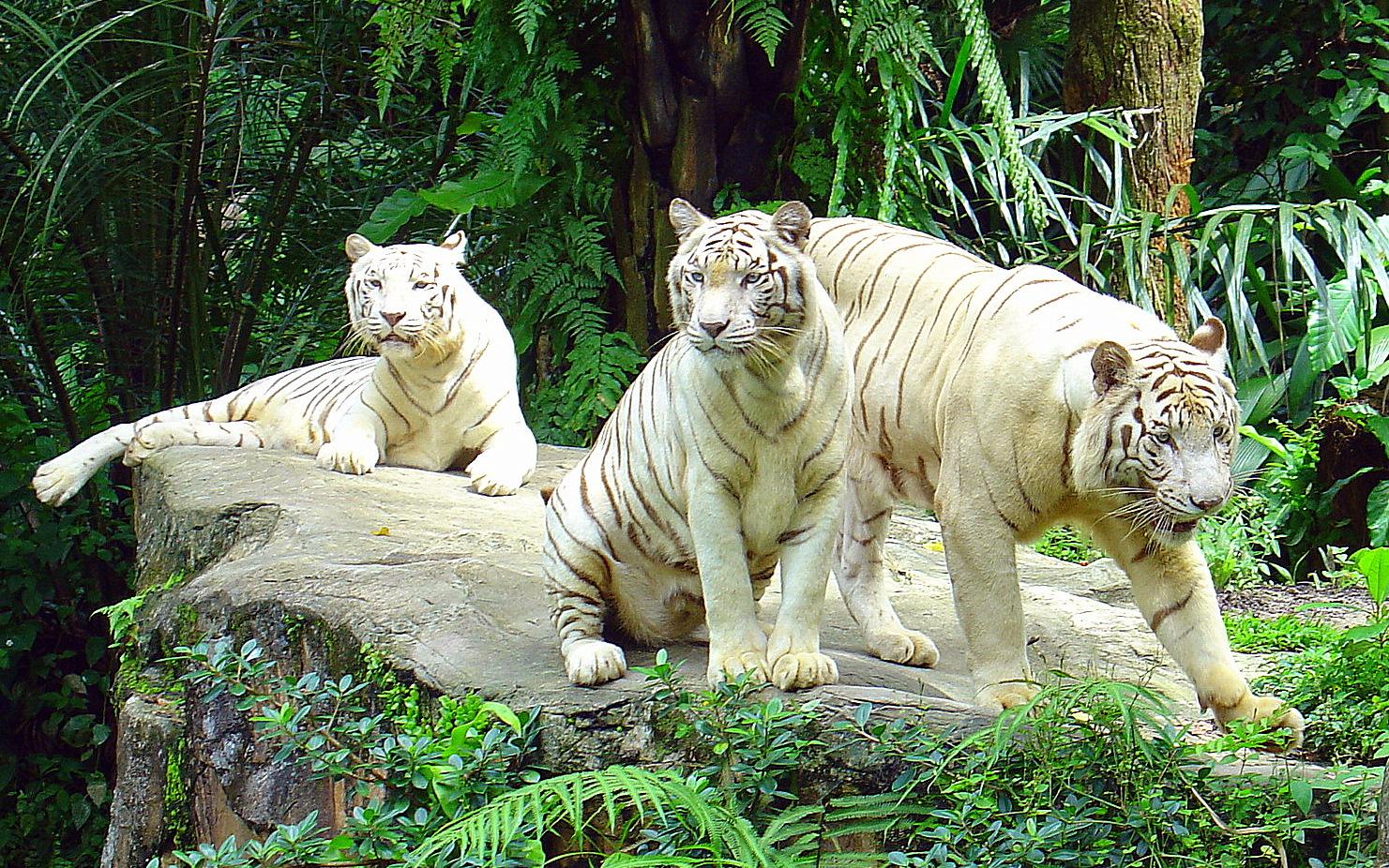 باغ وحش سنگاپور | تور سنگاپور